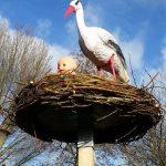ooievaars nest 2